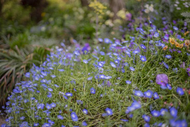 直島の花9