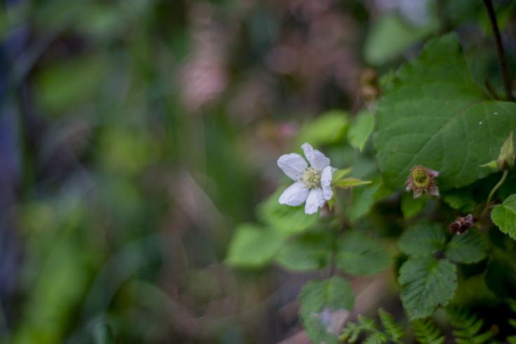 直島の花3
