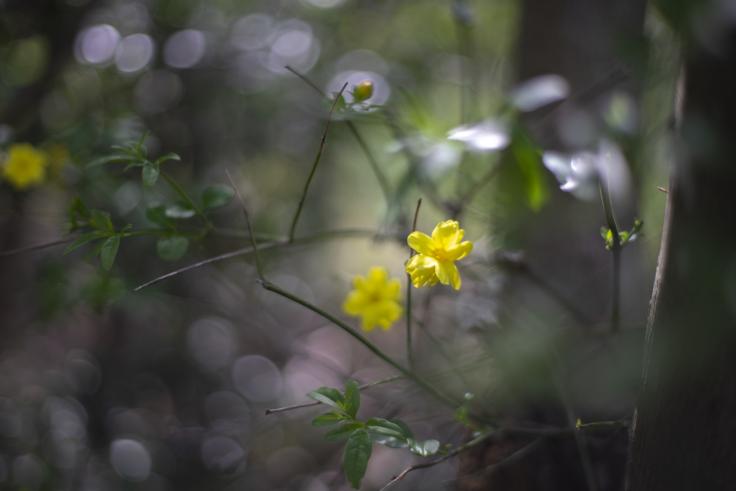 直島の花10