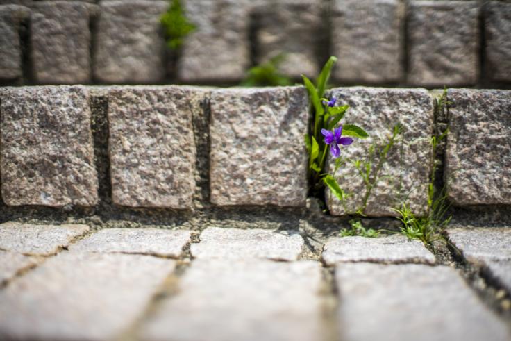シーサイドギャラリーの小花