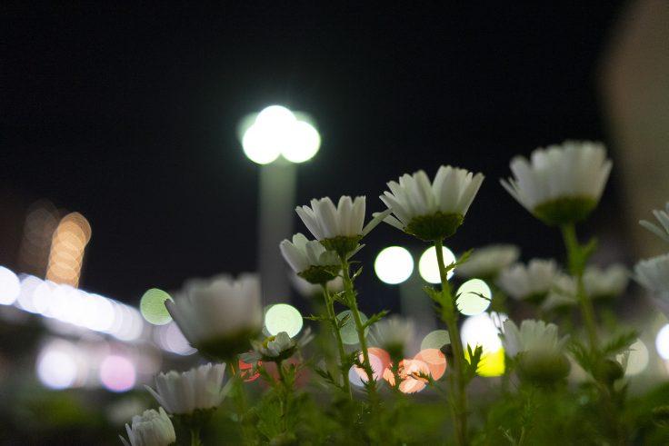 夜のノースポールローアングル