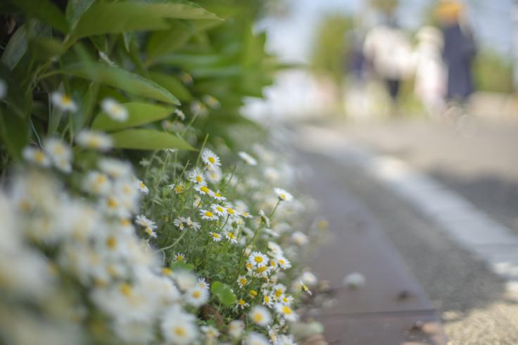 沙弥島の花2
