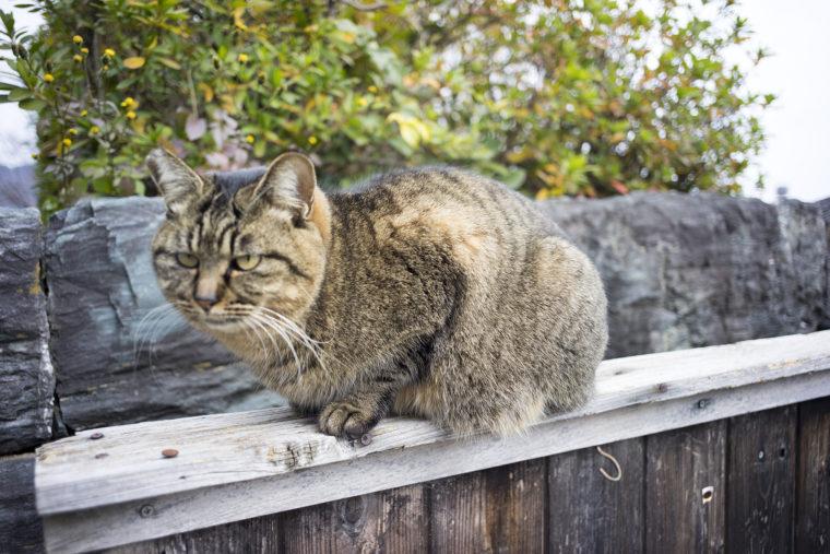 王子神社の猫