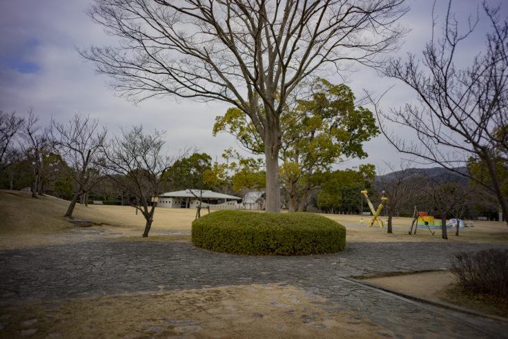 徳島県文化の森総合公園知恵の森