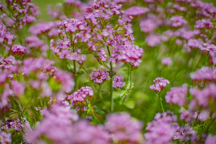 番の州公園の花3