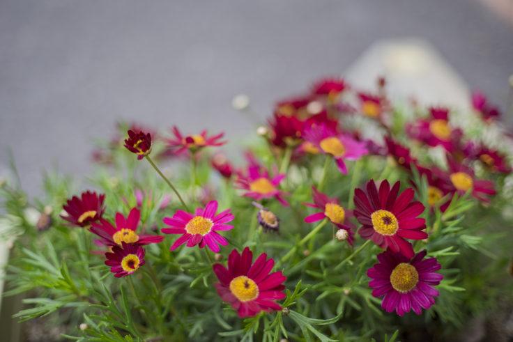 中華そば3の3の花