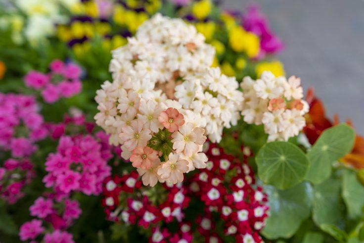 不明の花4