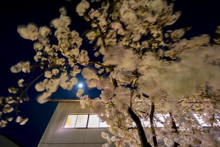宇多津町の夜桜3