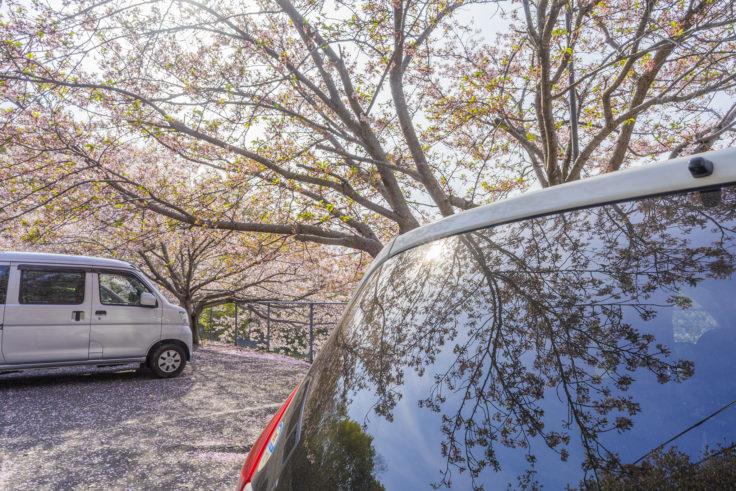白山の桜リフレクション