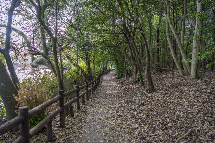 亀鶴公園の亀島