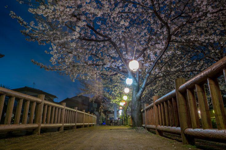 鹿ノ井出水の夜桜ライトアップ