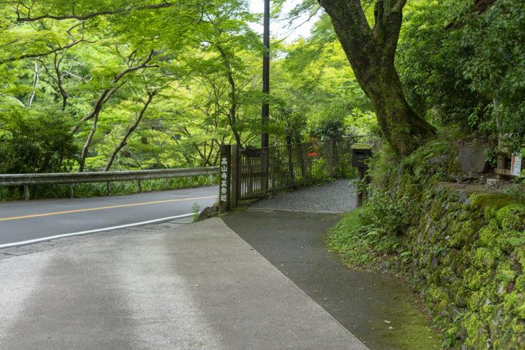 高山寺裏参道