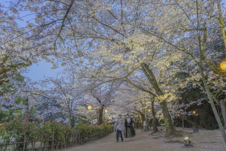 栗林公園の春のライトアップ