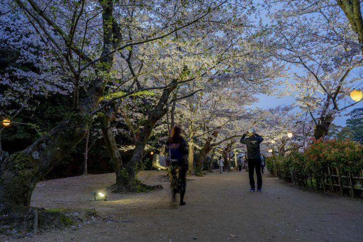 栗林公園の春のライトアップ2