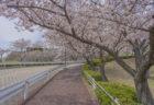 徳島文理大学香川校の桜