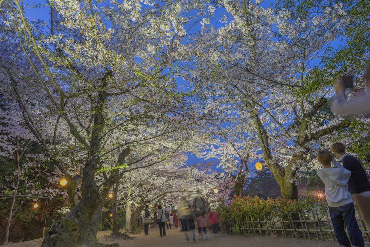栗林公園の春のライトアップ3