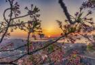 白峰展望台の夕焼けと桜2