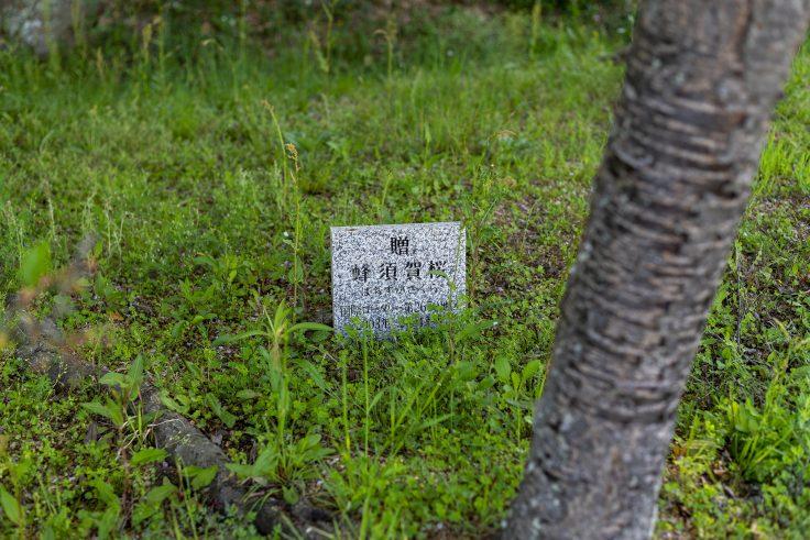 ハチスカザクラ(蜂須賀桜)の表示