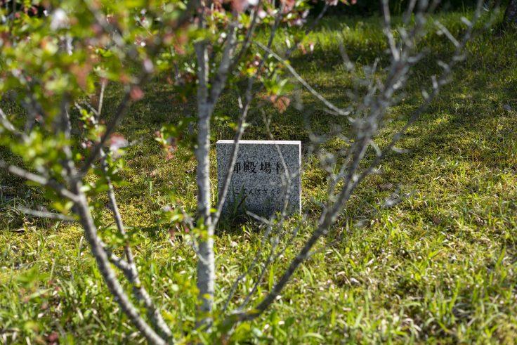 ゴテンバザクラ(御殿場桜)の表示