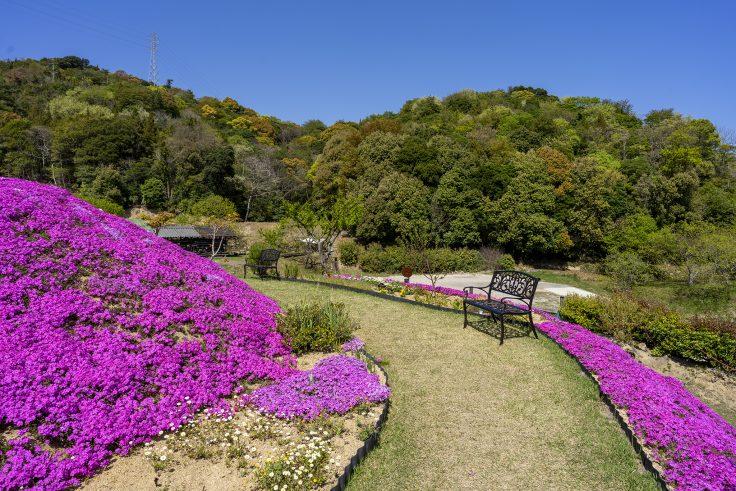 芝桜富士のベンチ