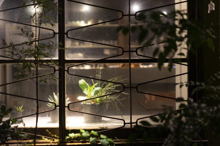 北浜の店内植物