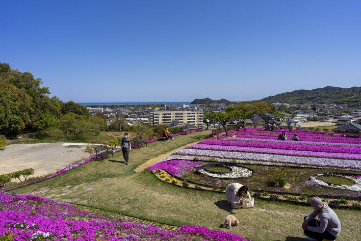芝桜富士から見た瀬戸内海