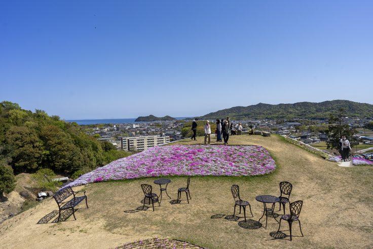 芝桜富士頂上