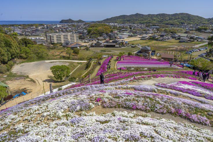 芝桜富士頂上からの眺め3