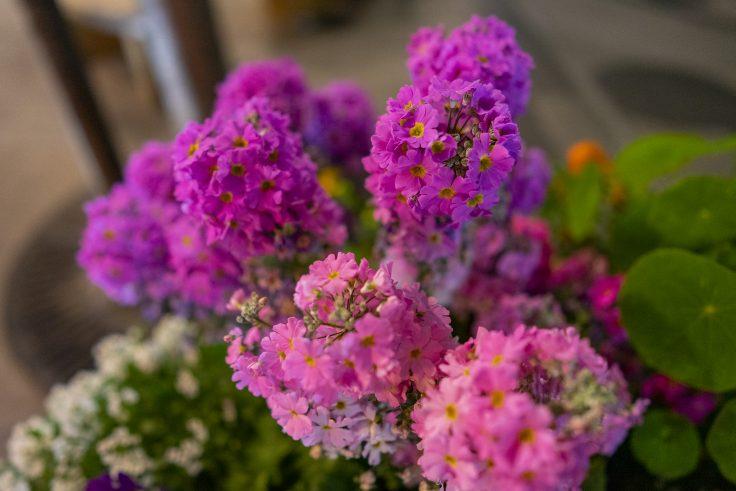不明の花5