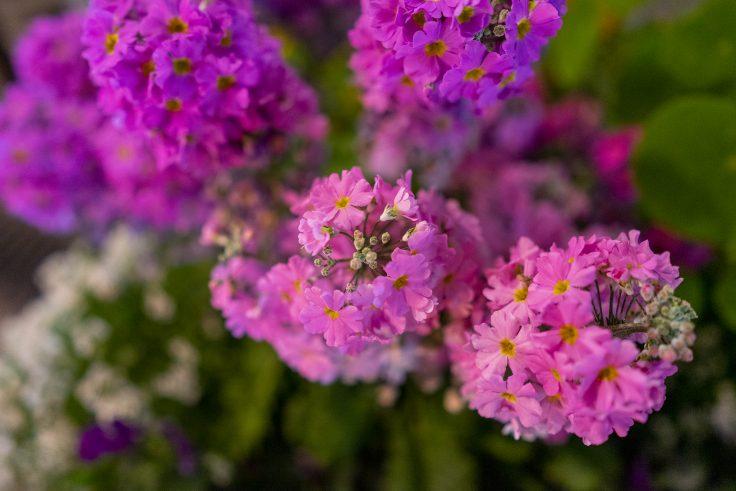 不明の花6