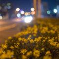 SONY α7+CONTAX G Planar T*45mm F2で夜散歩~高松市校外編