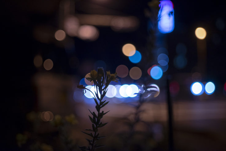 夜の花玉ボケ