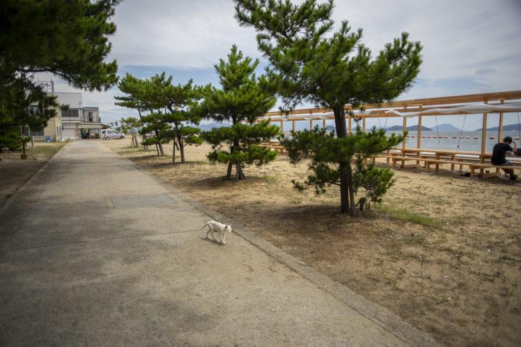 女木島の島ネコ