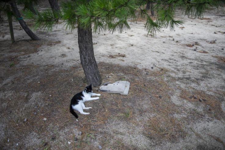 女木島「的屋」占い当たりの猫