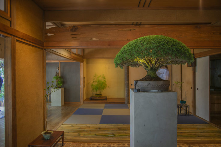 女木島「BONSAI deepening roots」の盆栽