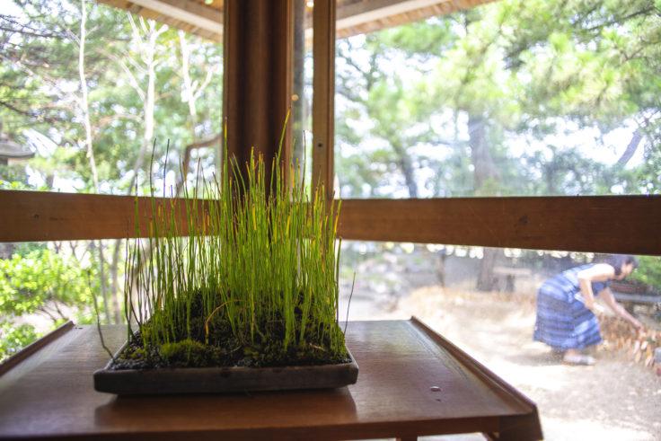 女木島「BONSAI deepening roots」の緑