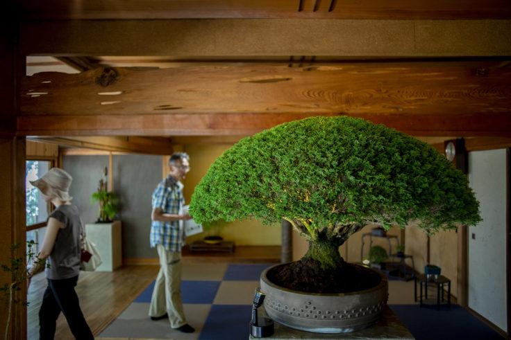 女木島「BONSAI deepening roots」の盆栽アップ