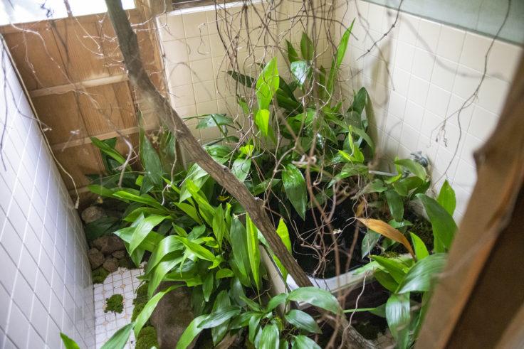 女木島「BONSAI deepening roots」浴槽