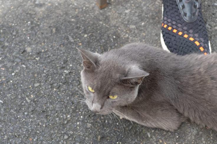 北灘漁協組合さかな市の猫ちゃん