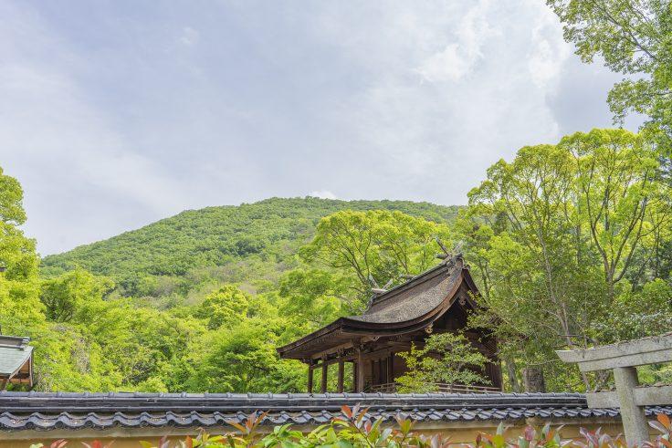 神谷神社本殿檜皮葺2