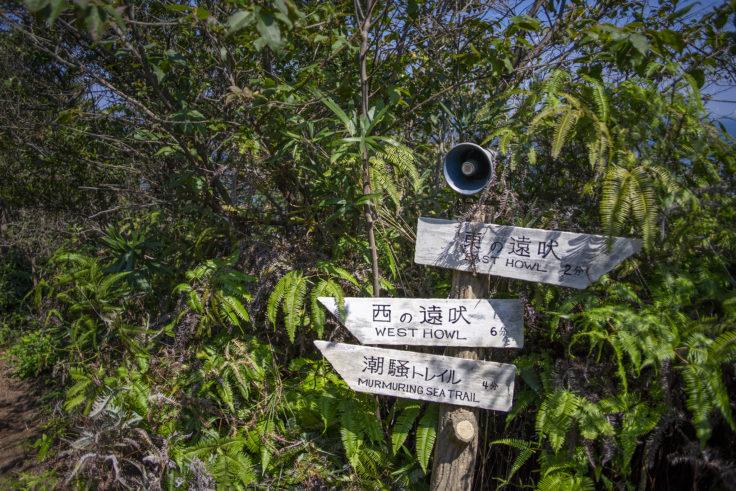大島北の山の登山道分岐