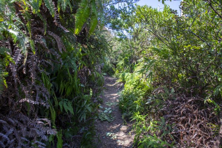 大島の美しい山道