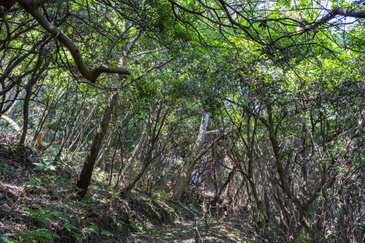 大島北の山美しい森