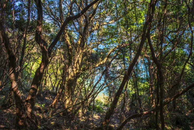 大島北の山美しい森2