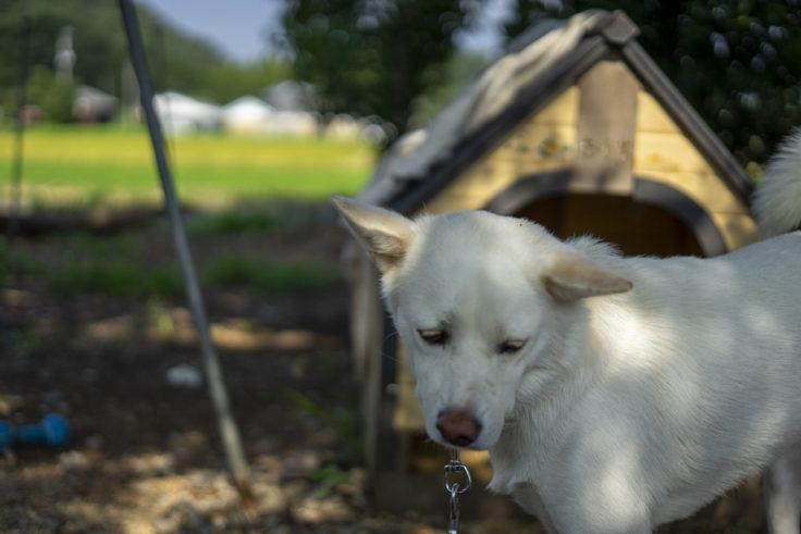 うしおじさんの犬3