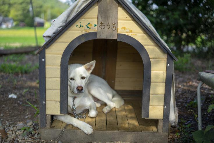 うしおじさんの犬6
