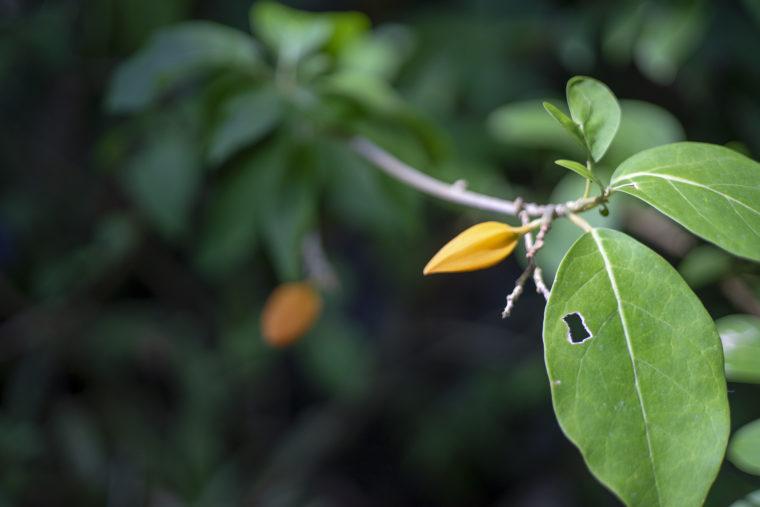 京都府立植物園の木の実