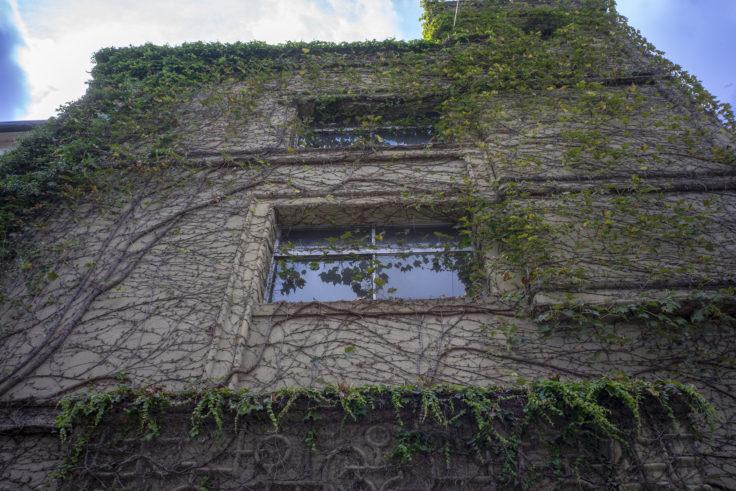 渉成園入口にある蔦のビル