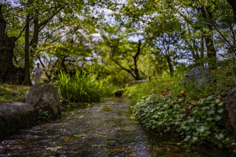 渉成園の小川