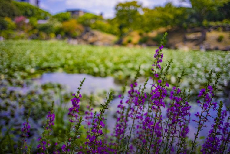 渉成園の印月池